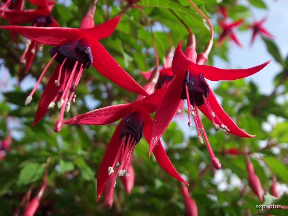 Forever Fuchsia by ezphotoz