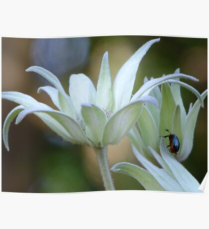 Soft Flannel Flowers Poster