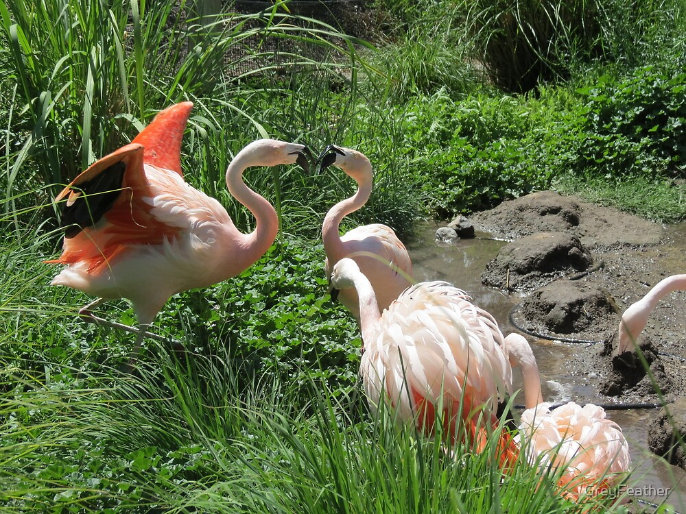 Chilean Flamingos by GreyFeather