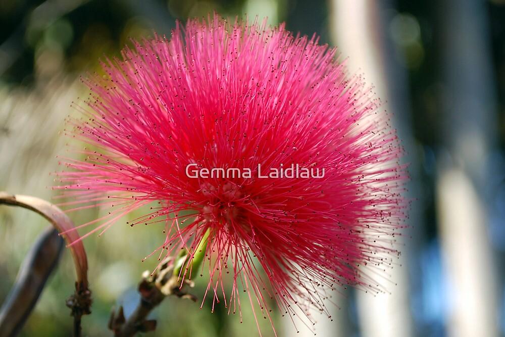 Prickly pink by Gemma Laidlaw