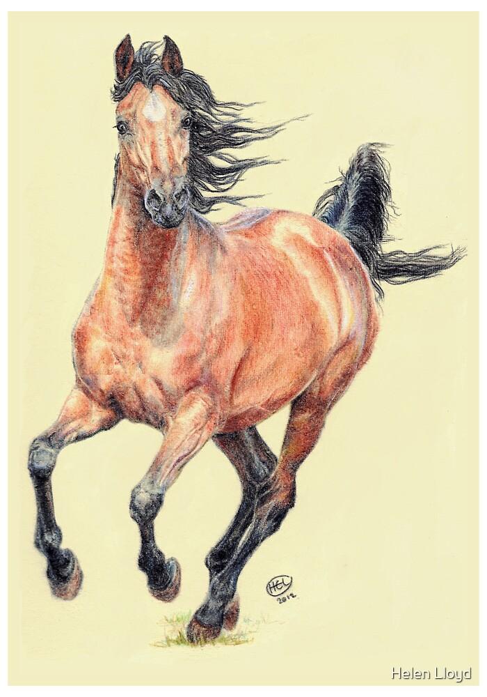 Bay Arab Horse by Helen Lloyd