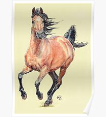 Bay Arab Horse Poster