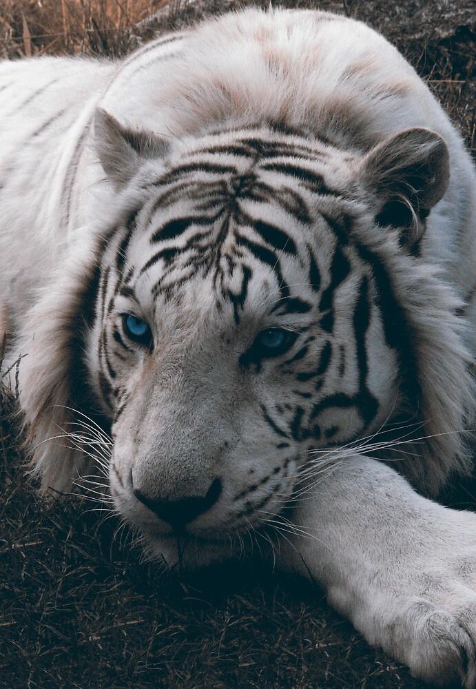 White Tiger - Aleks Czudej by czudej