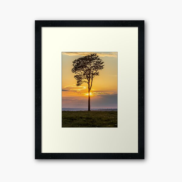 Roundway Hill at Sunset Framed Art Print