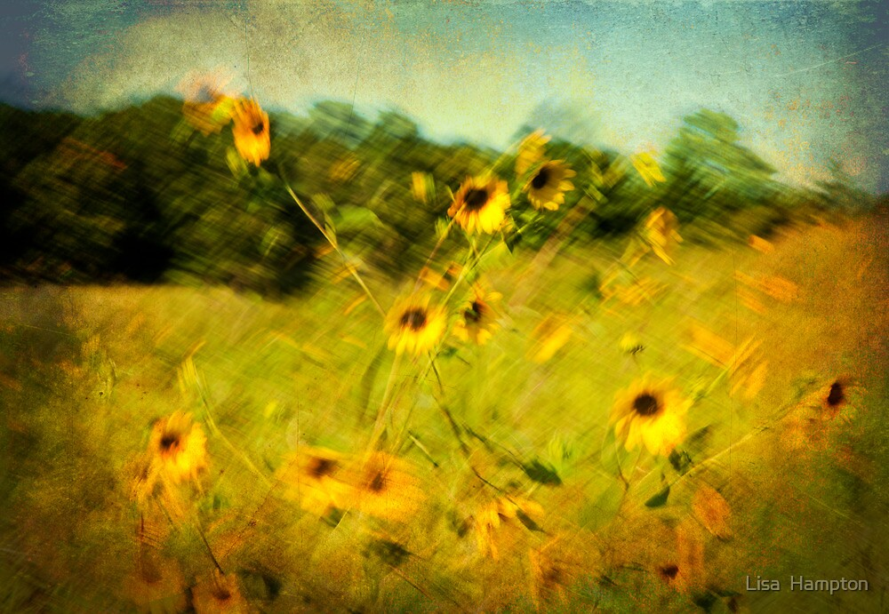 Black-Eyed Susans on a Summer Day by Lisa  Hampton
