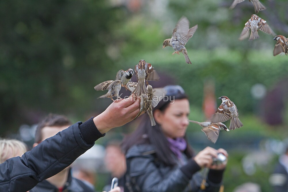Sparrows being hand fed near Notre Dame in Paris, France by Keith Larby