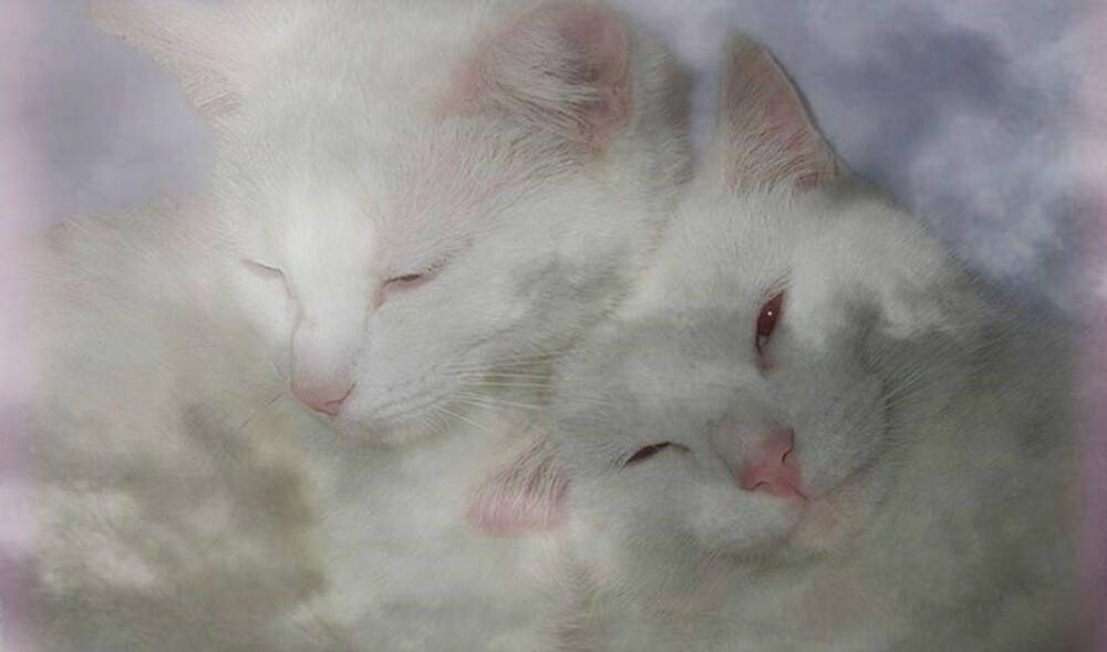 Cats In The Clouds by Rick Wollschleger