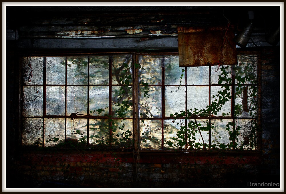 The Ivy Window  by Brandonleo