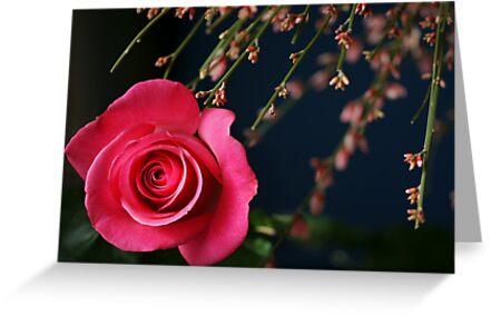 Astounding Blossom ~ Pink Rose by JETAdamson