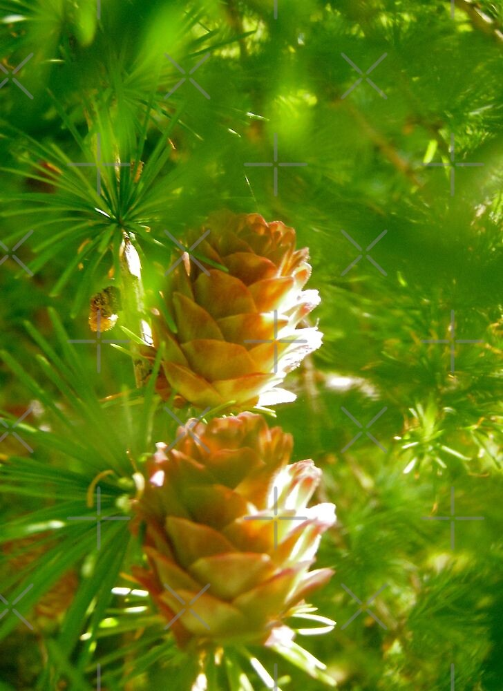 Pine Cones by Shulie1