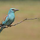 Blue Bird.............. by Macky