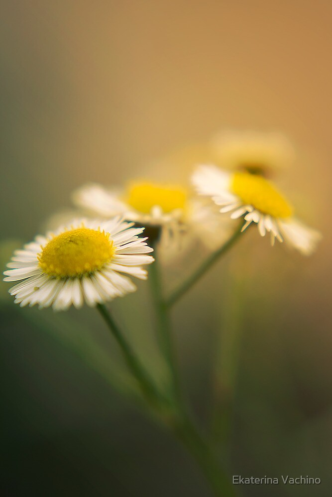 Simple Beauty by EkaterinaLa