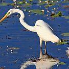 ''Egret'' by bowenite