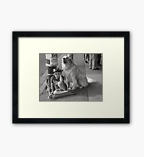 Guard Dog Framed Print