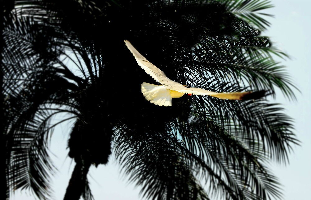 Seagull and Palm by mhm710