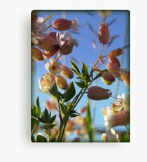 Wild Flowers Canvas Print