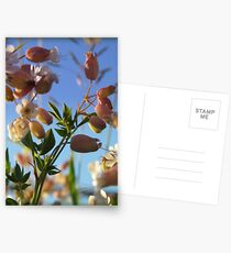 Wild Flowers Postcards