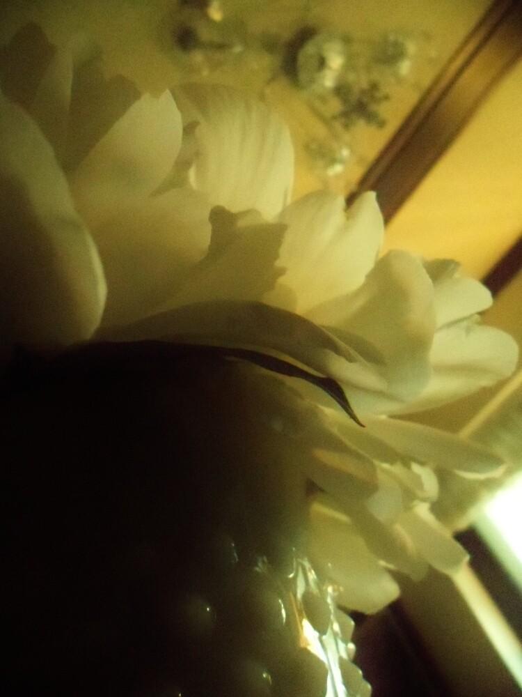 white petals by Chelsea P