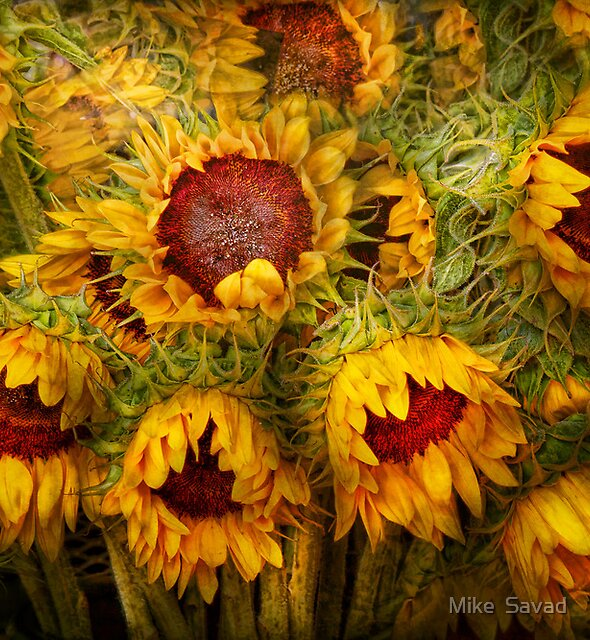 Flowers - Sunflowers - You're my only sunshine by Michael Savad