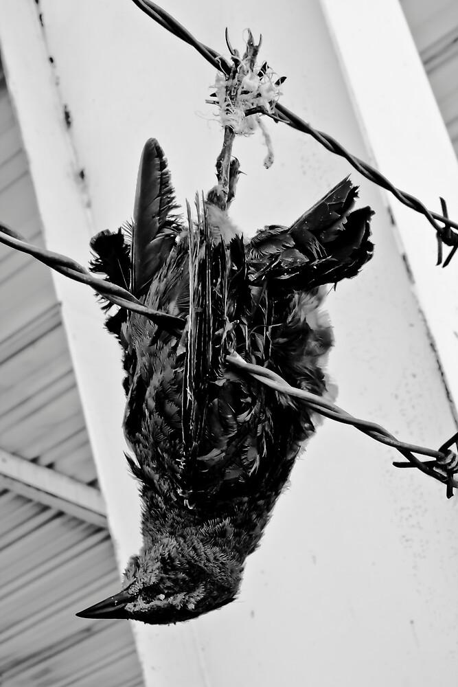 A dead bird by miramefotos