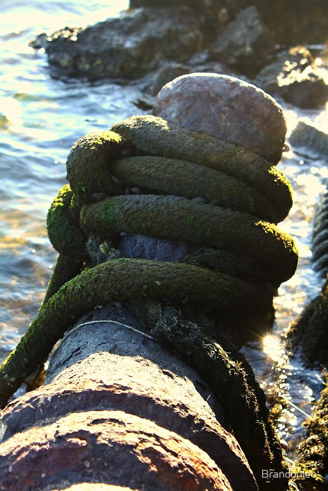 Big Green Rope  by Brandonleo