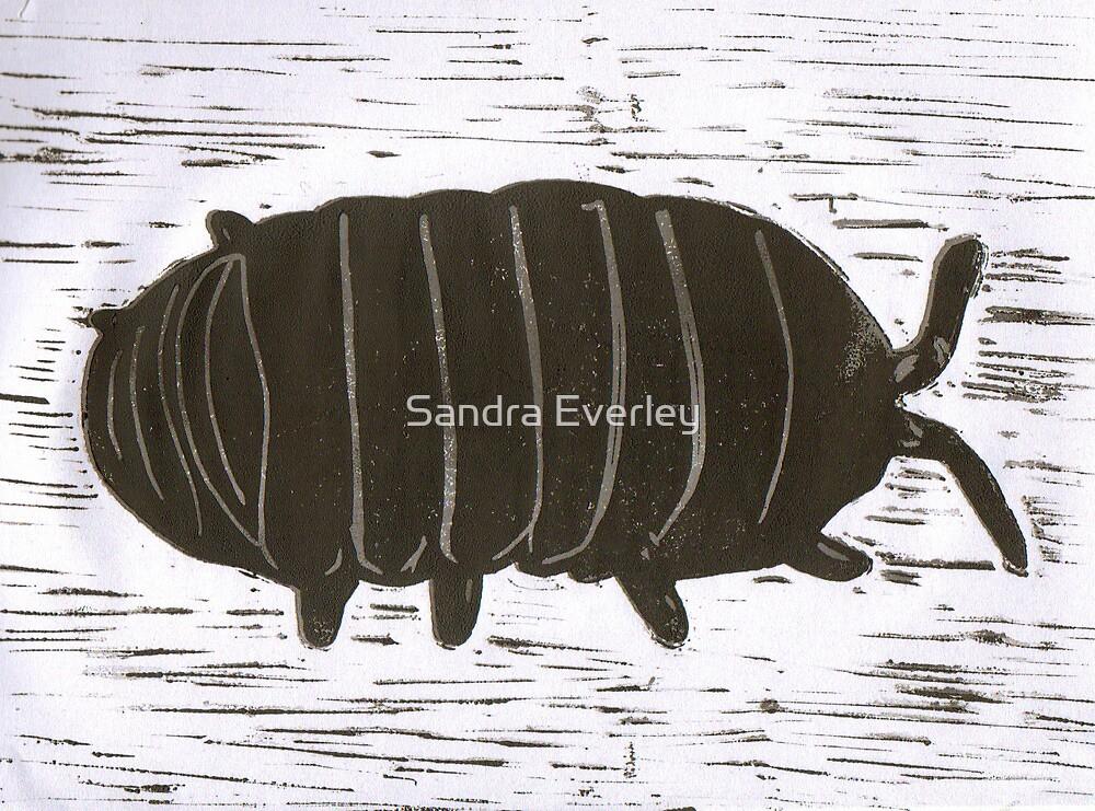 Wood Louse by Sandra Everley