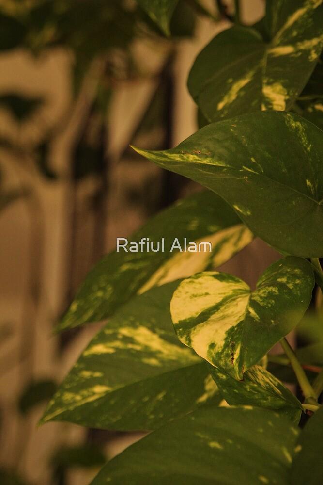 Ivy Leaves by Rafiul Alam