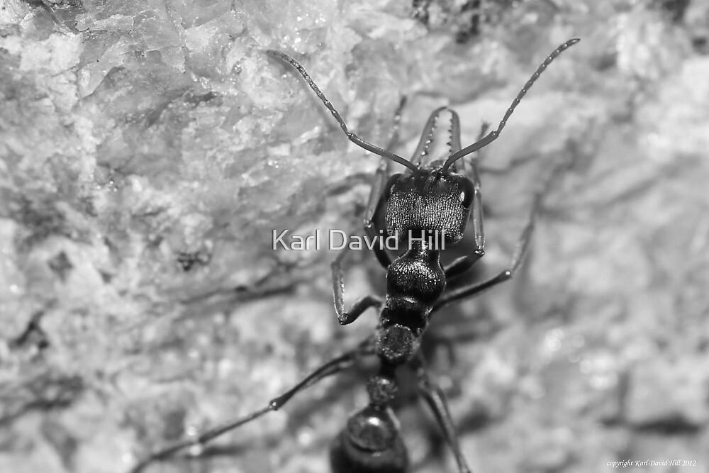 macro ant 001 by Karl David Hill