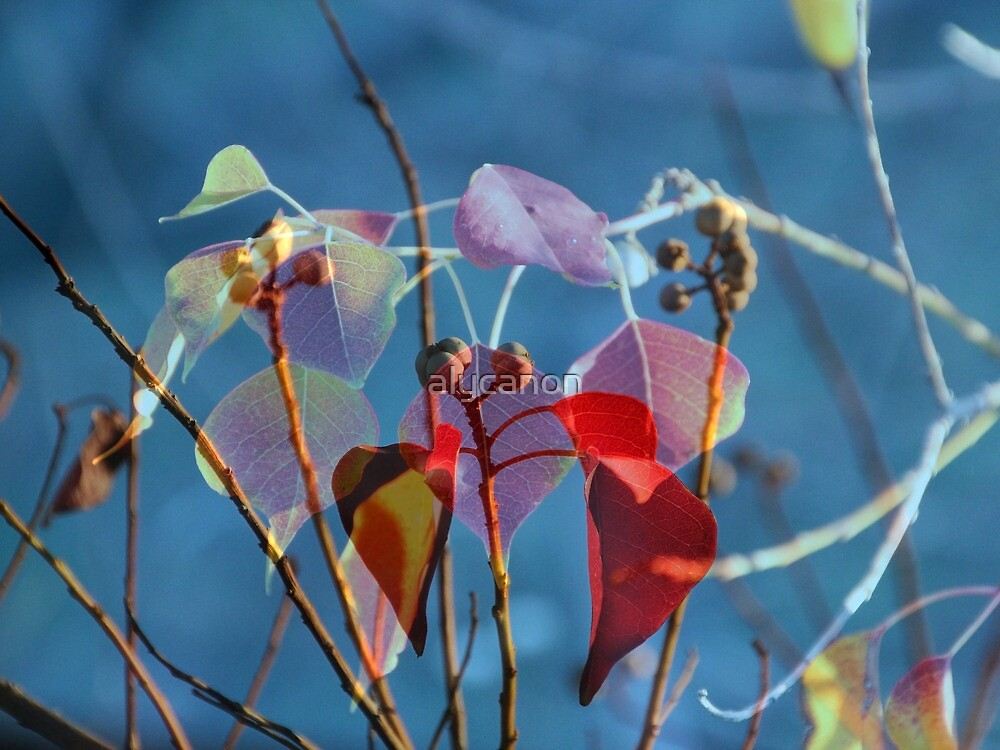 Collage of Autumn Leaves by alycanon