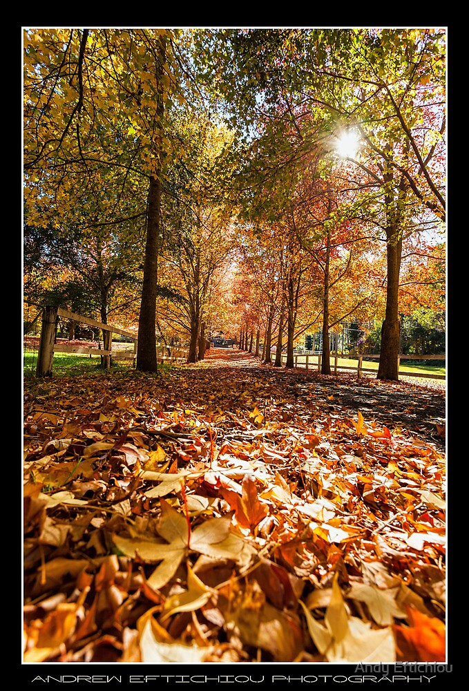 Autumn Leaves by Andy Eftichiou