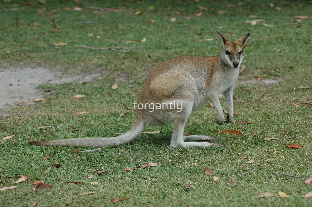Australia Zoo 2006 by forgantly