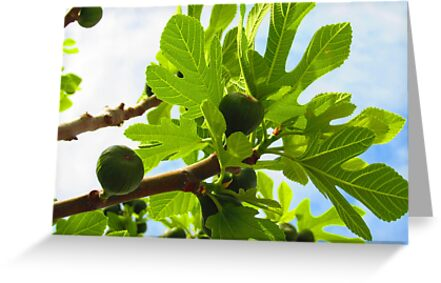 Figs of Ephesus by M-EK