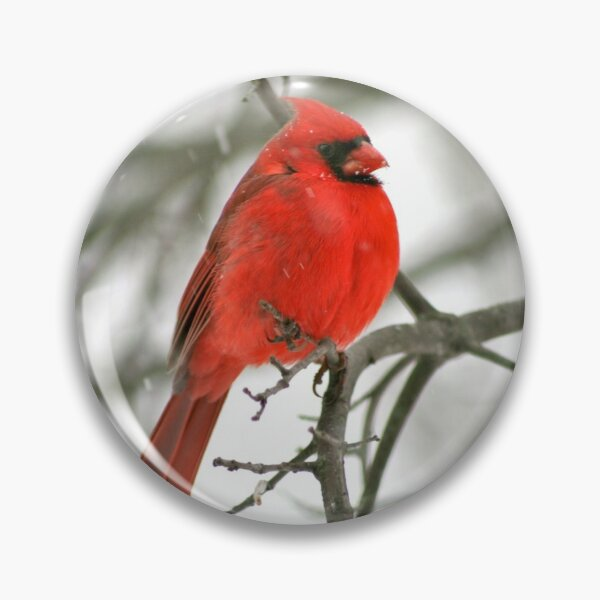 Winter Redbird Pin