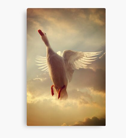 Yet Another White Duck Canvas Print