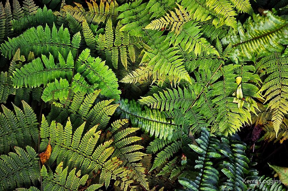 Fern Forest by Kerry Loggins