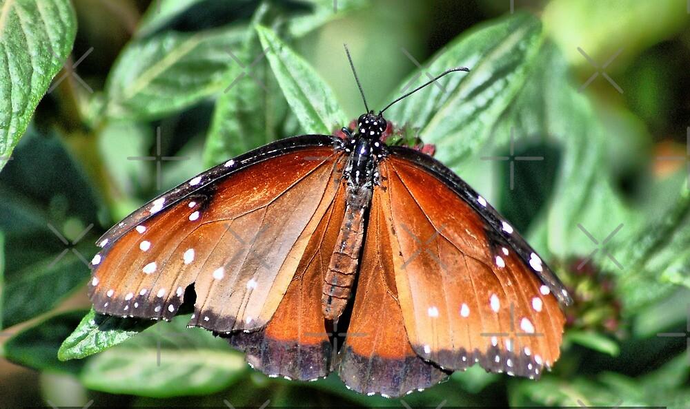 Butterfly on right flower by loiteke