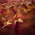 Red Motion by GoldenRectangle