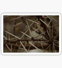 Acacia Thorns Sticker