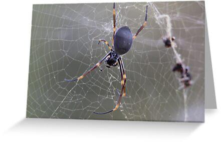Wicked Web by Sally Haldane