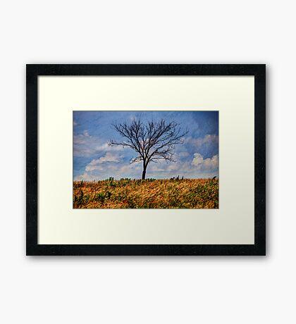 Tree Texture Framed Print