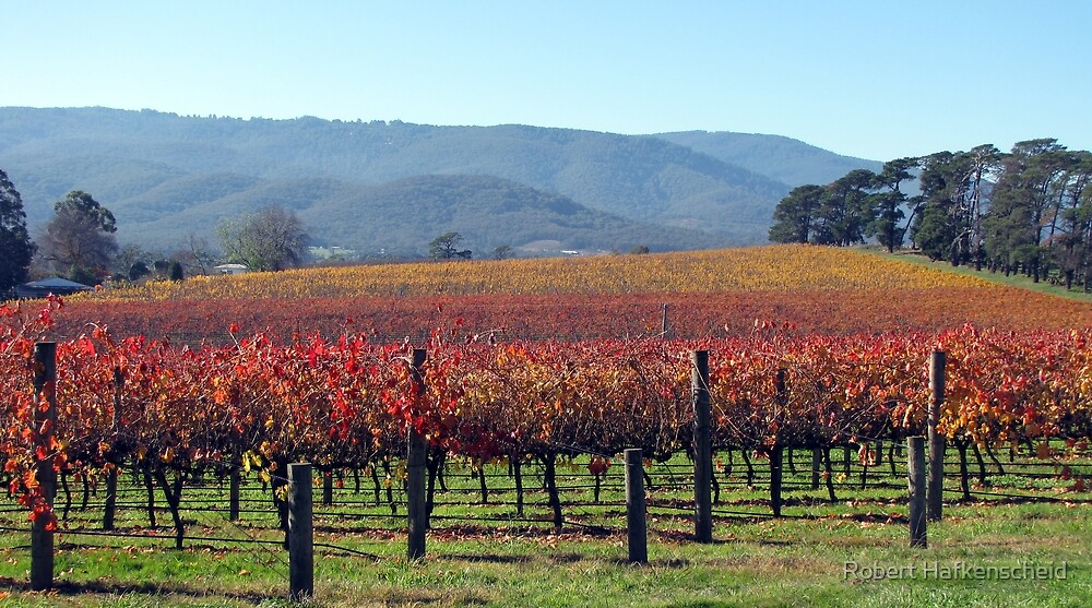 Vineyards in Yarra Valley by Robert Hafkenscheid
