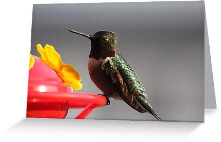 Pretty Lil HummingBird # 1 by gypsykatz