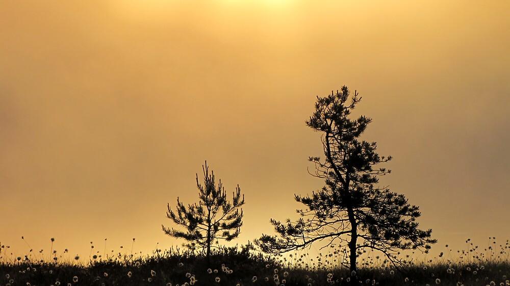 16.6.2012: On the Shore by Petri Volanen