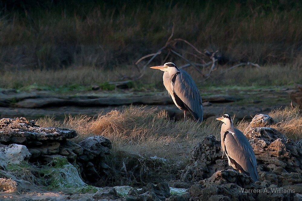 Last Light for The Heron's by Warren. A. Williams