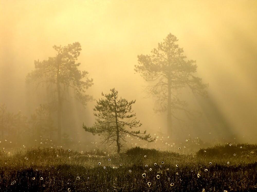 16.6.2012: Sweet Wilderness by Petri Volanen
