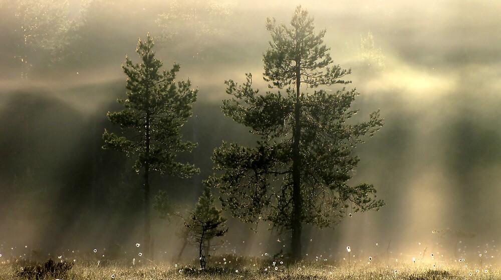 16.6.2012: Magical Morning Vision by Petri Volanen