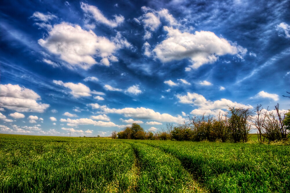 I Dream of Blue Skies by Vicki Field