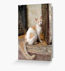 Street Cat, Fes, Morocco Greeting Card