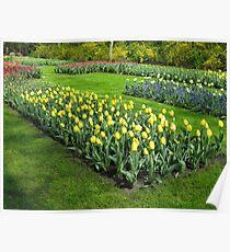 Beds of Tulips - Keukenhof Gardens Poster