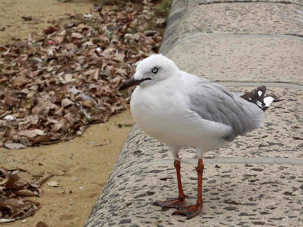 Seagull by SophiaDeLuna